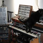 CatSynth Pic: Black Cat, Minimoog, EMS Synthi, Rhodes, and Doepfer