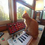 CatSynth Pic: Orange Cat, Behringer Neutron, Arturia Keystep