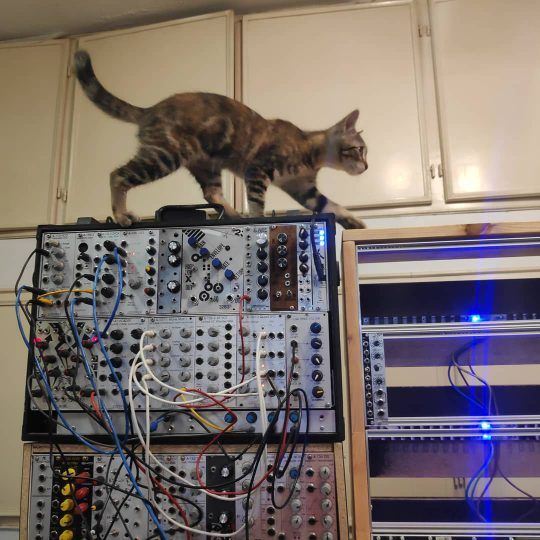 Lilly the cat atop the modular system