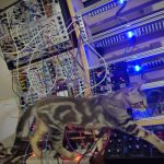CatSynth Pic: Max in the Studio (Modular, Model D, and more)