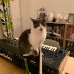 CatSynth Pic: Gracie and Oberheim OB-Xa