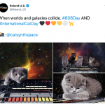 CatSynth Pics: #808Day and #InternationalCatDay