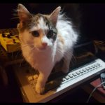 CatSynth Pic: Lilli and TR-909 (on 9/10)