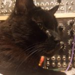 CatSynth Pic: Mystery Cat and Modular