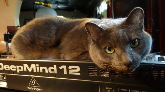 Eliot the cat and Behringer DeepMind 12