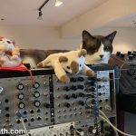 CatSynth Pic: Merp, Modular, Mother-32