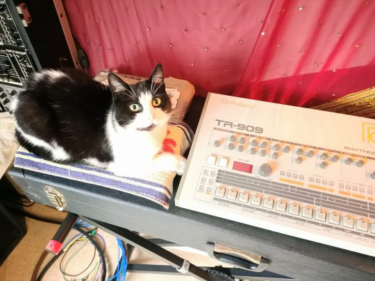 Pinki the cat with a Roland TR-909 drum machine