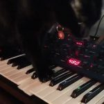CatSynth Pic: Dexter A. Catt (Sequential OB6)