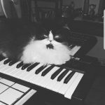 CatSynth Pic: Guess the Keyboard