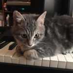 """CatSynth Pic: Tabby Cat and """"Guess the Synth"""""""