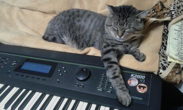 CatSynth Pic: Big Baby Kurzweil K2000S