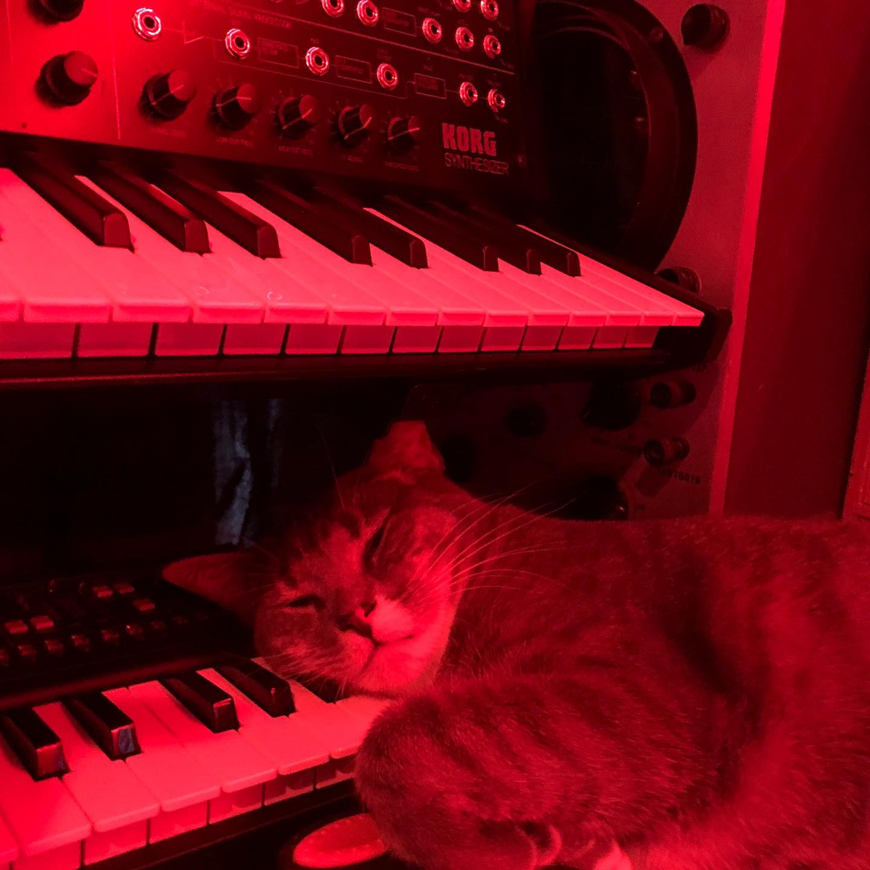 CatSynth Pic: Elektra and Korg MS-20