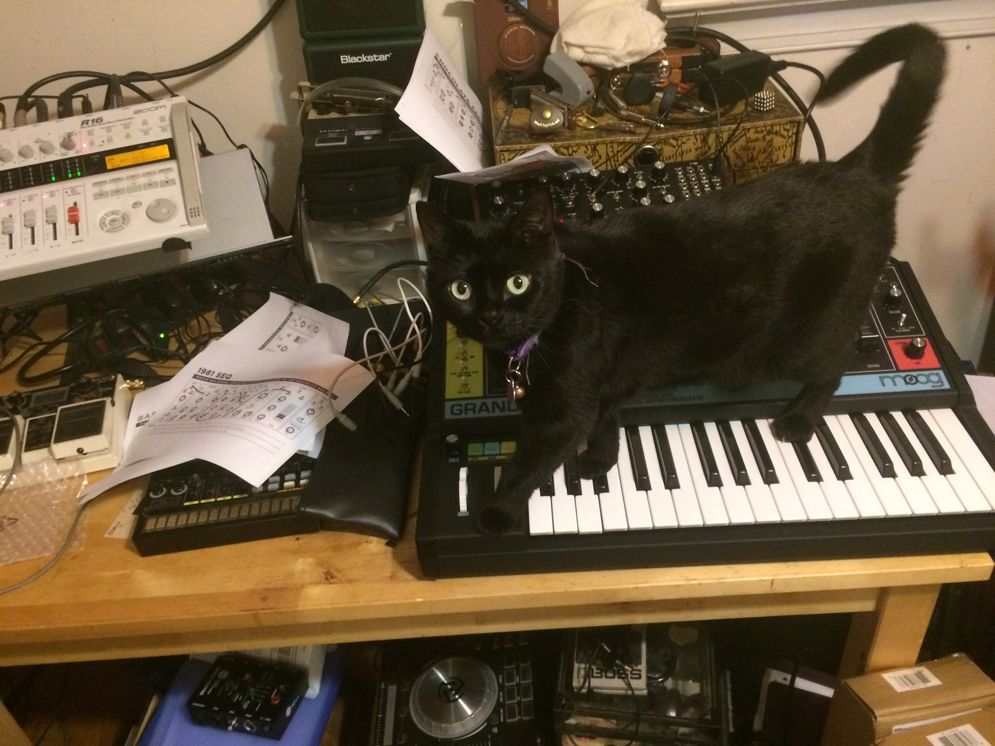 Beautiful black cat with Moog Grandmother synthesizer