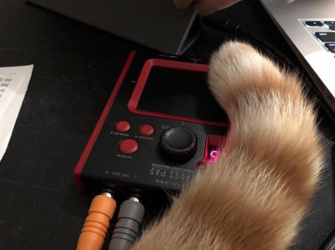 CatSynth Pic: Tail and Mini Kaoss Pad