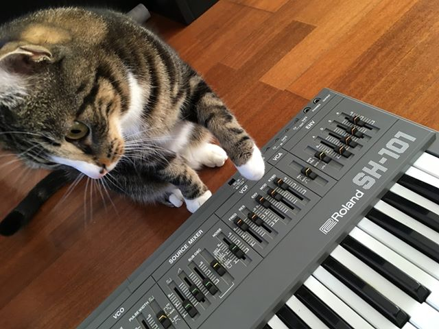 CatSynth Pic: Fluff and Roland SH-101
