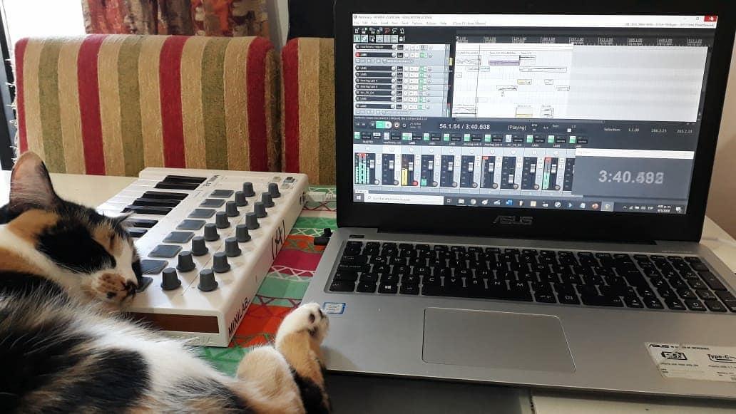 CatSynth Pic: Arturia MiniLab keyboard