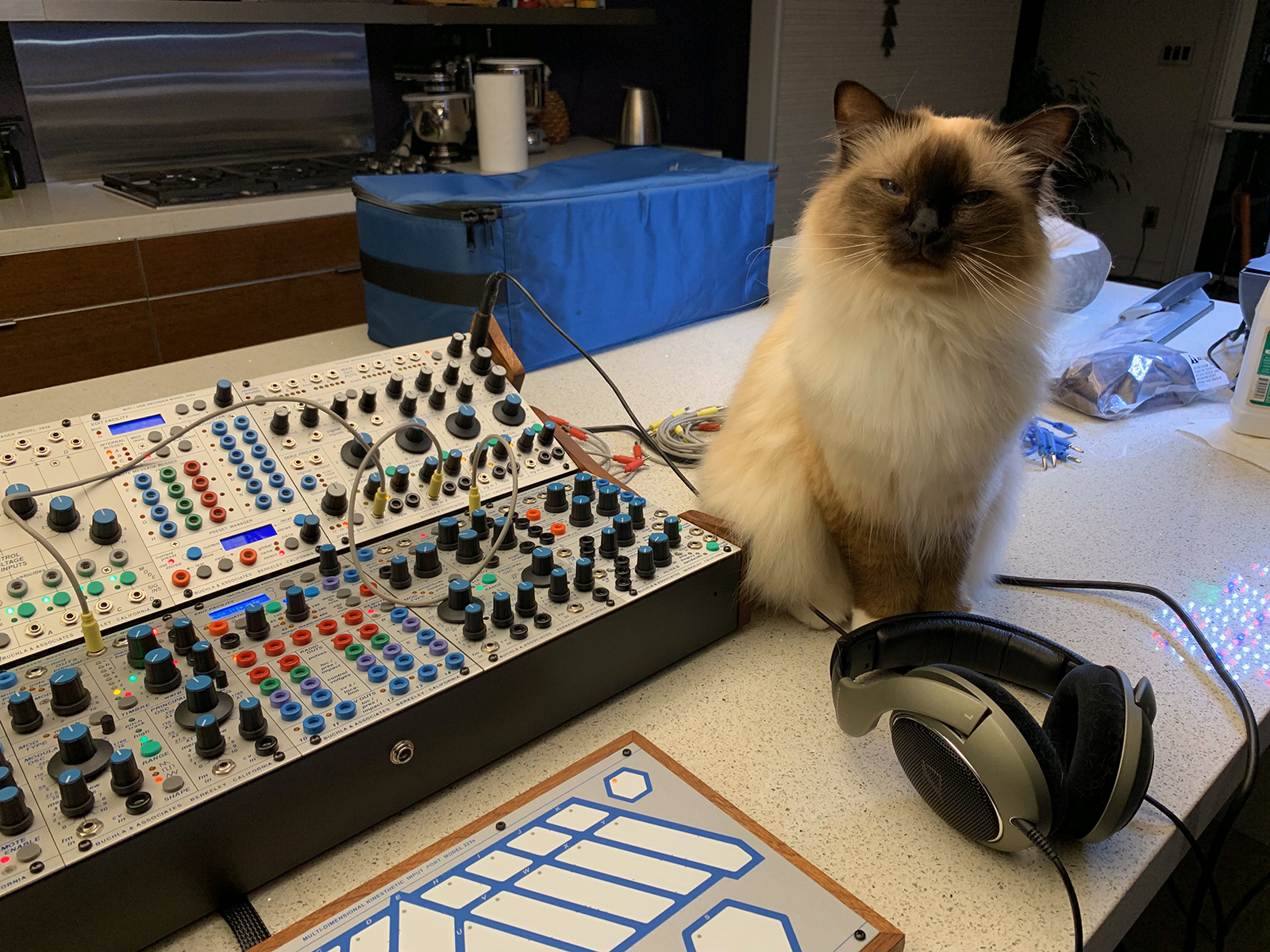 Cat with Buchla Skylab modular synthesizer.