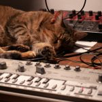 CatSynth Pic: Boulette, Roland TB-303, and Access Virus