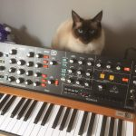 CatSynth Pic: Monty and Behringer Poly D