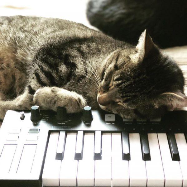 Tabby cat Charlie Parker naps on an Arturia Keystep