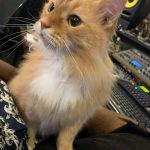 CatSynth Pic: Willow in the Studio