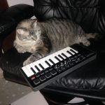 CatSynth Pic: Jojodakat and Samson MIDI controller