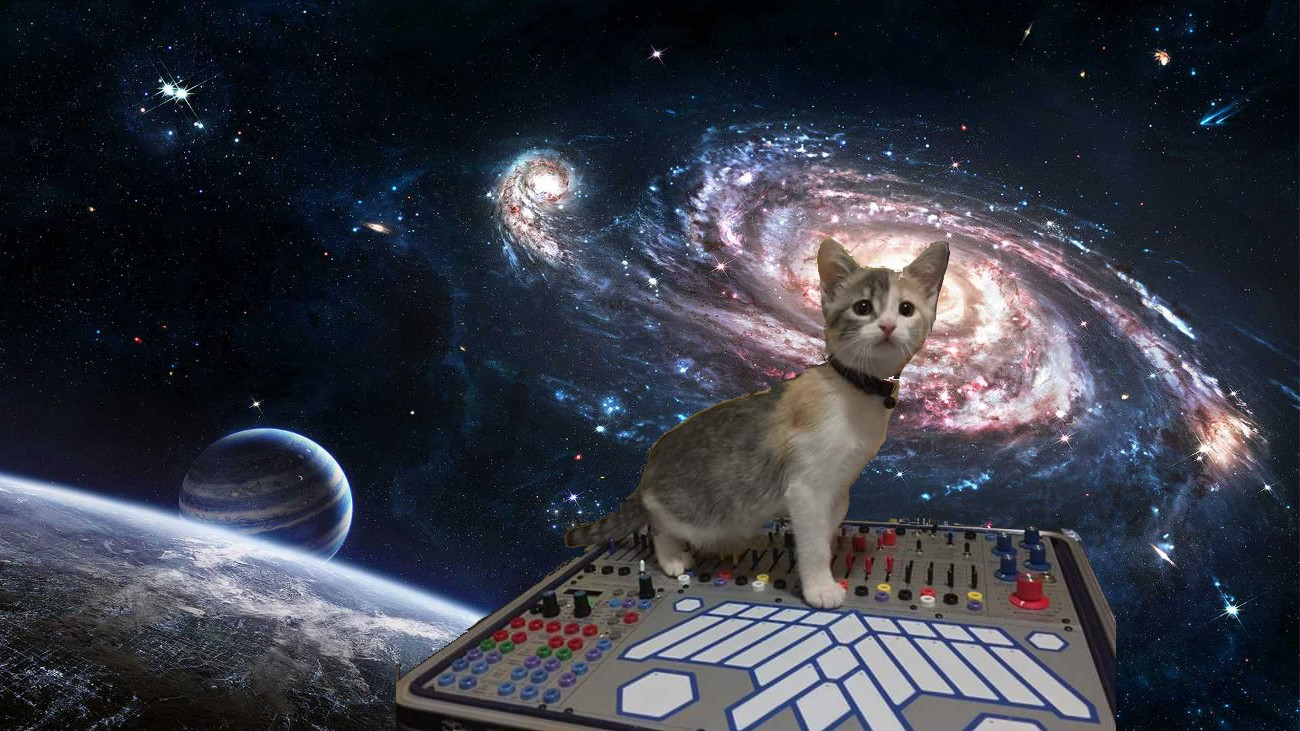 Cat on Buchla in space.