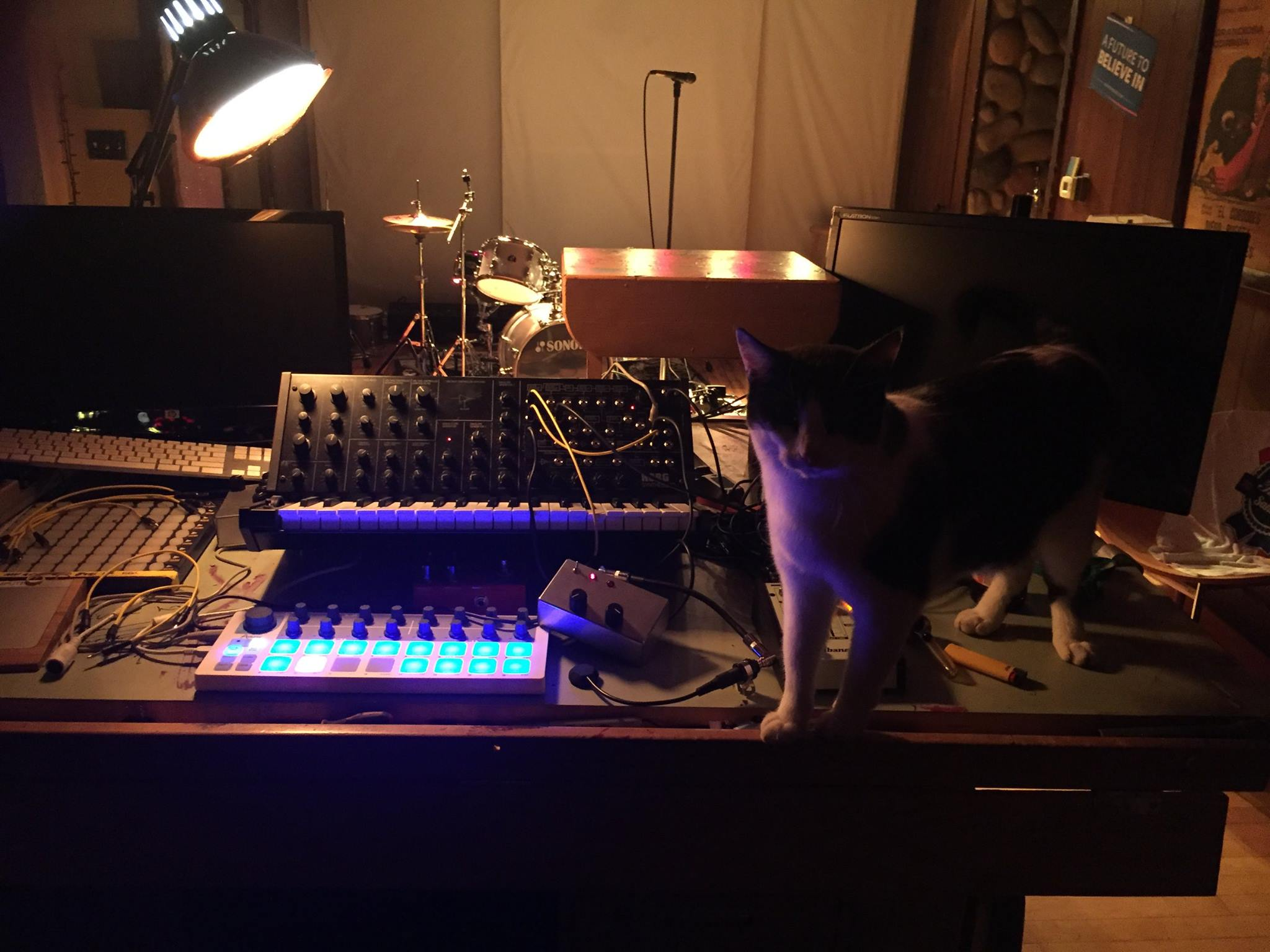 Cat and Korg MS-20 mini