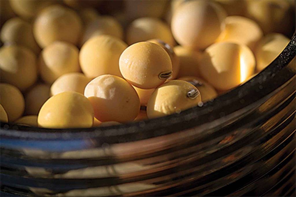 A study by the Farm to Market alliance found that U.S. soybean production increased 96% from 1980 to 2011.
