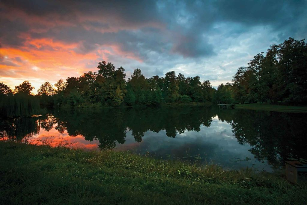 Restored wetlands help protect the environment while boosting wildlife populations.