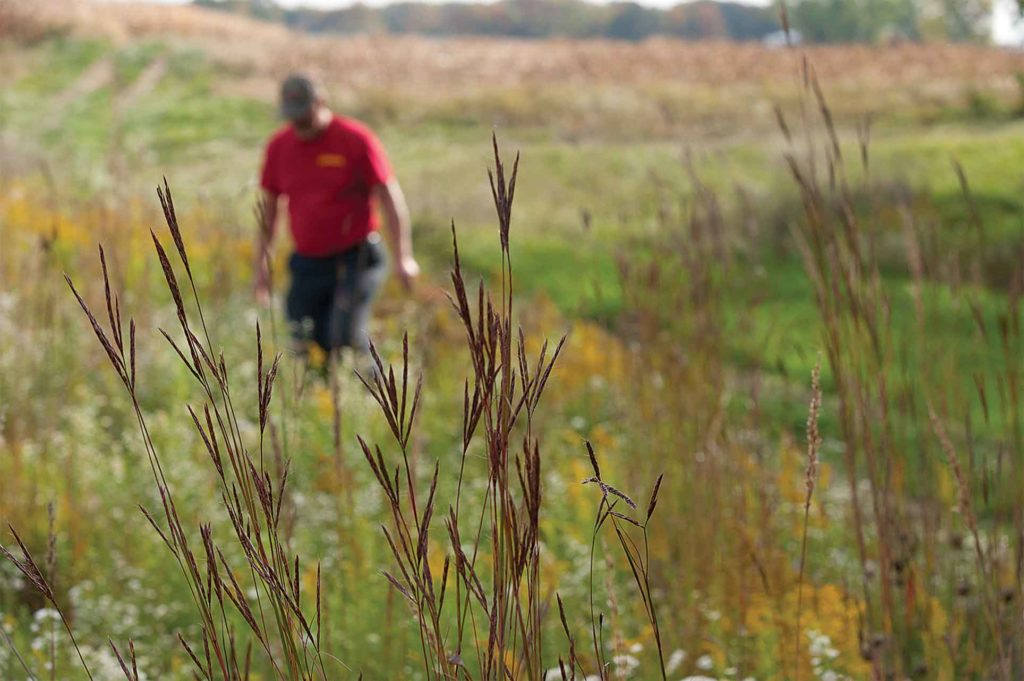 Filter strips and riparian buffers target small areas of land that have big impact on erosion, water quality, and wildlife habitat.