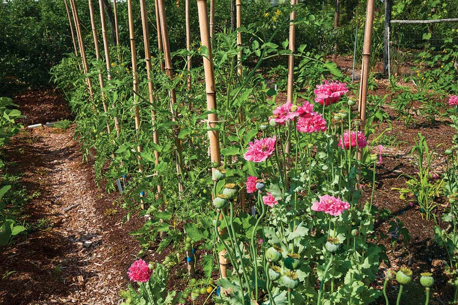 Narrow paths between garden beds are for foot traffic. Feet never go into the garden beds themselves.