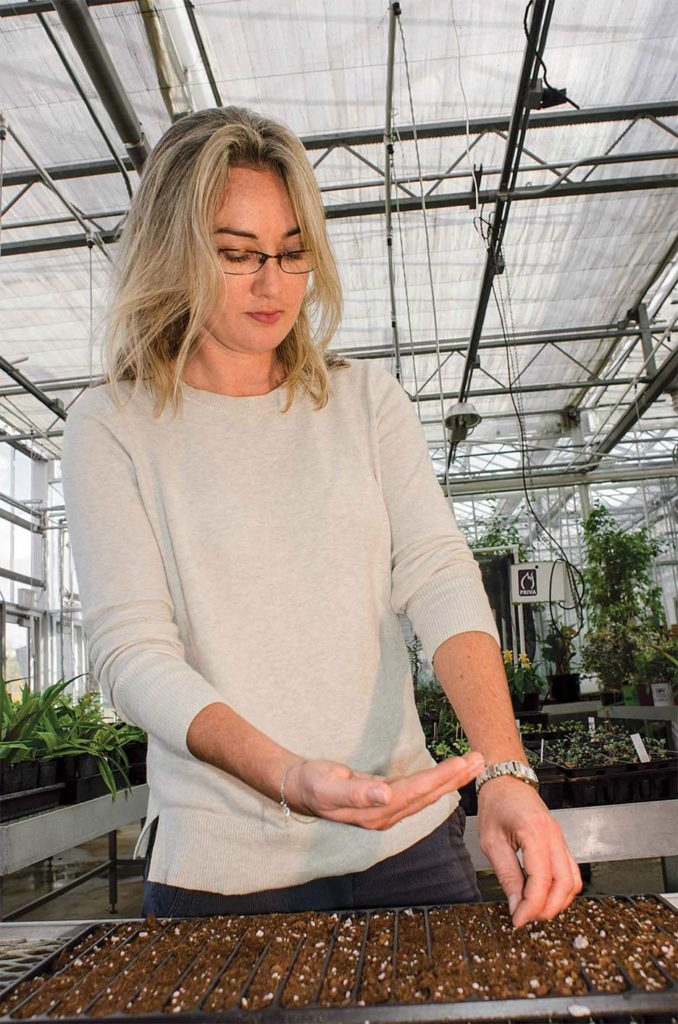 Natalie Bumgarner, University of Tennessee horticulturist, gets plants off to a good start in her on-campus greenhouse. She enjoys the genetic diversity available with mini tomatoes.