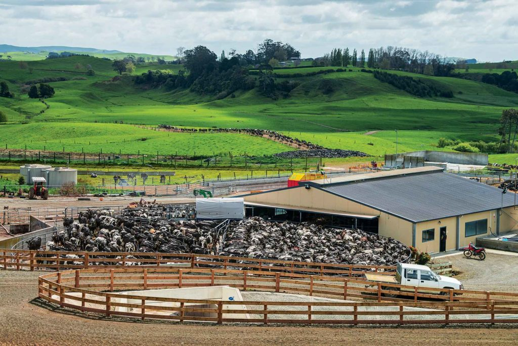 David and Jeremy Bennett's 1,055 cows cycle through the rotary milker in about three hours, part of the New Zealanders' quest for efficiency.