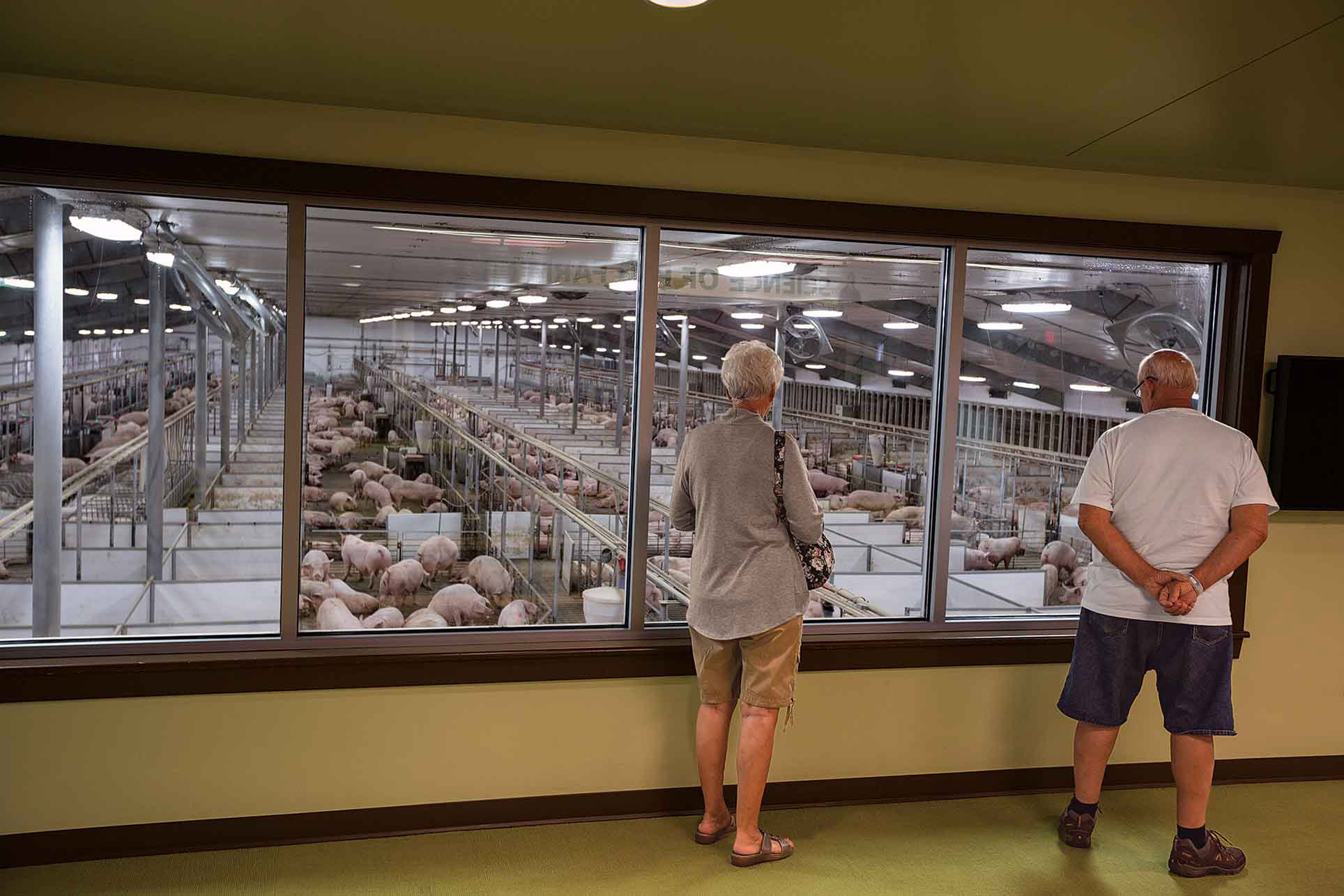 Getting A Skybox View Visitors To The Pig Adventure Take Advantage Of 25000 Square Feet