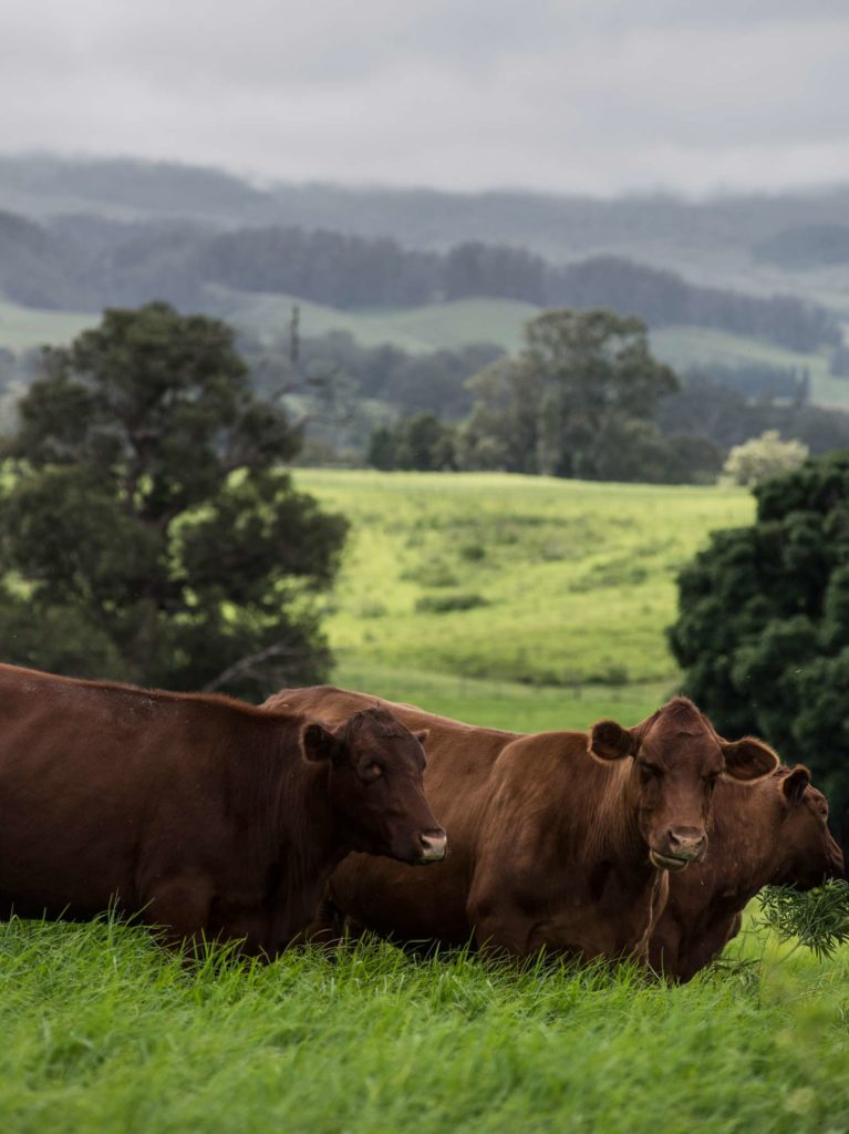 Maui-Cattle-Co.-The-Best-JPEG-1887_WEB