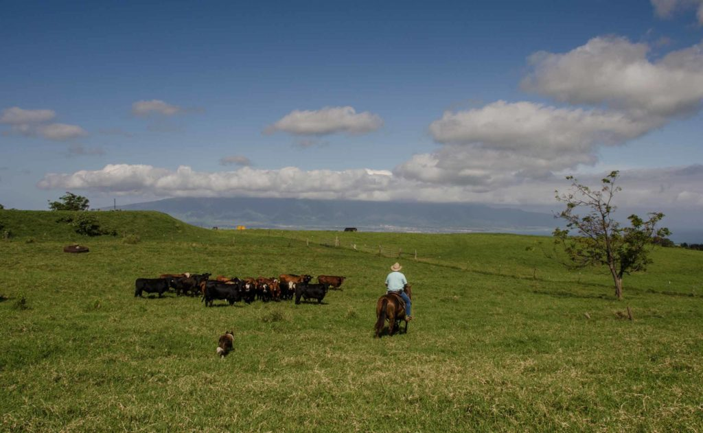 Maui-Cattle-Co.-The-Best-JPEG-689_WEB