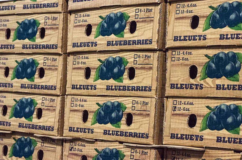 Durant le créneau commercial d'avril/mai, la ferme expédie ses bleuets aux quatre coins du pays.