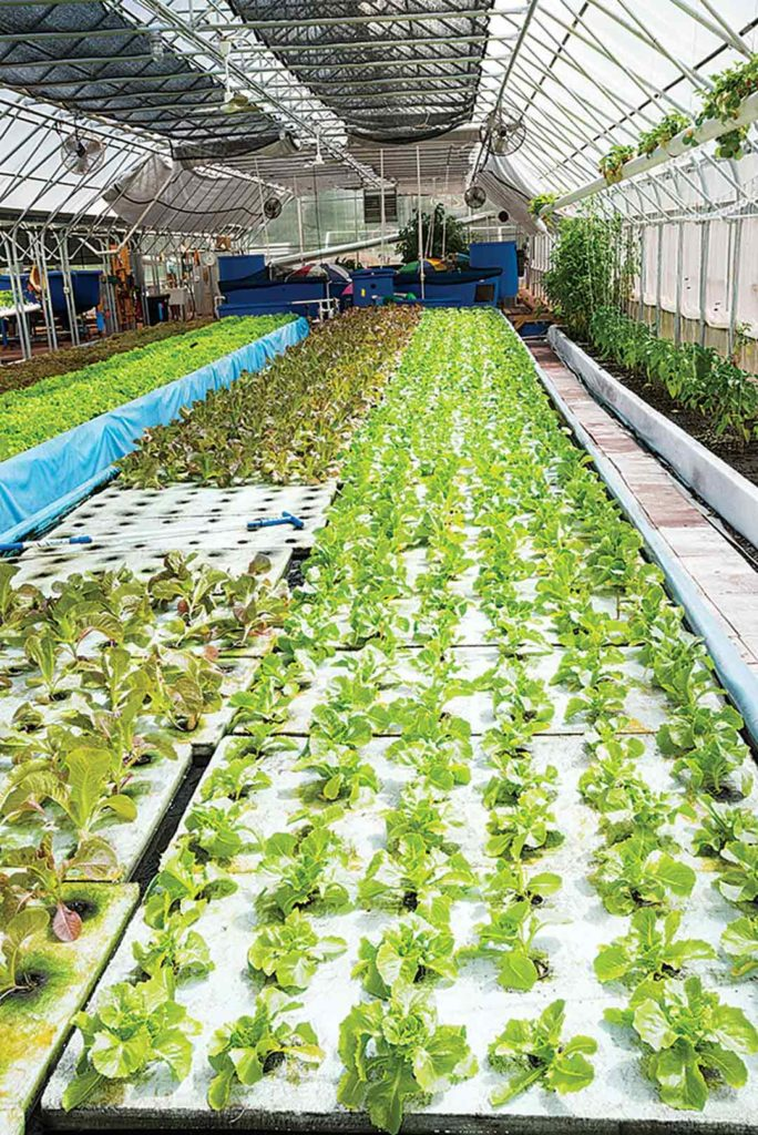 Produce-filled rafts move through the system until ready for market at the end.
