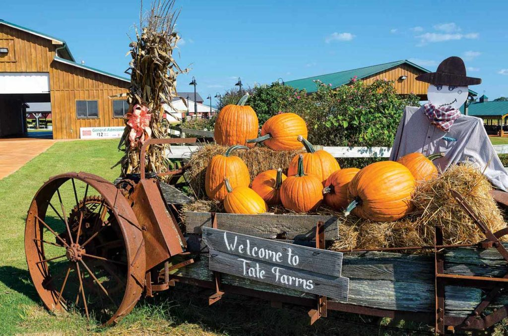 A pumpkin-filled welcome wagon greets visitors to the farm.