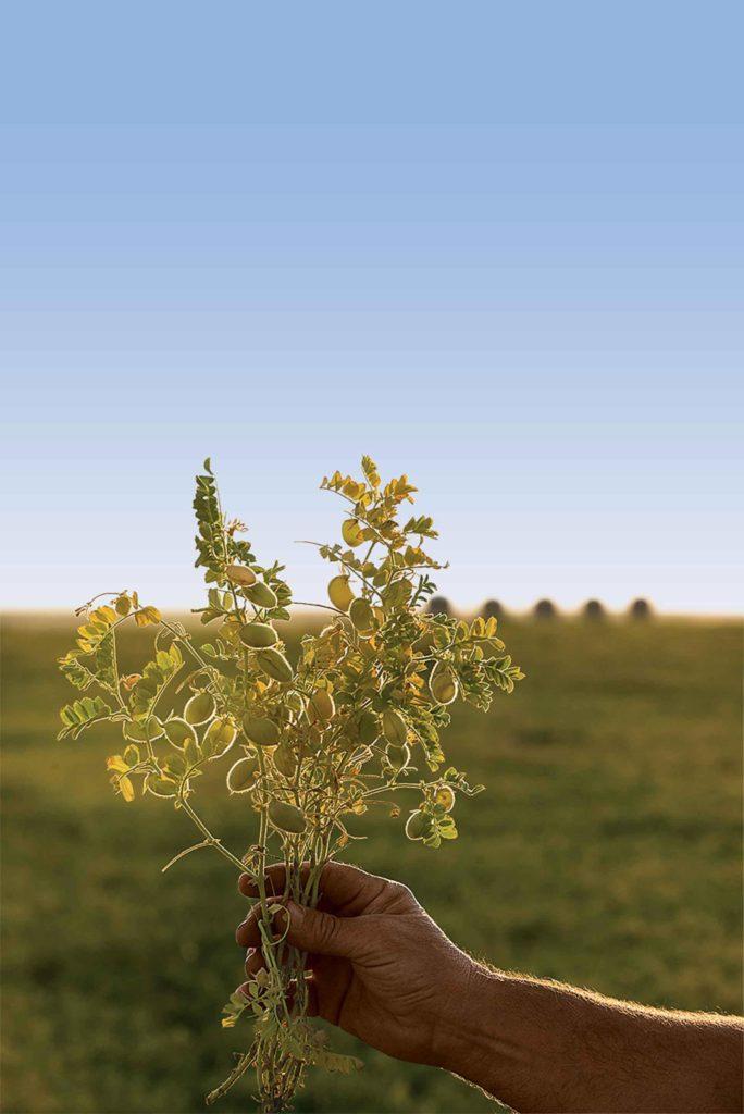 La popularité des légumes secs s'aligne sur les consommateurs qui veulent des options alimentaires plus saines.