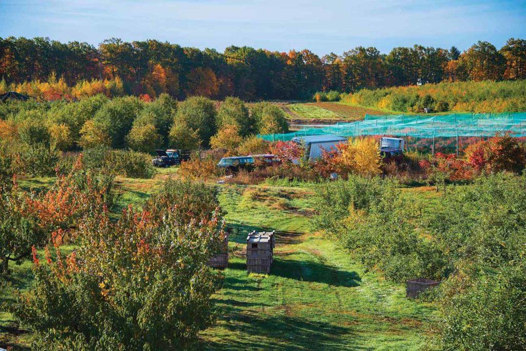 Le glanage est possible toute l'année dans les fermes diversifiées.