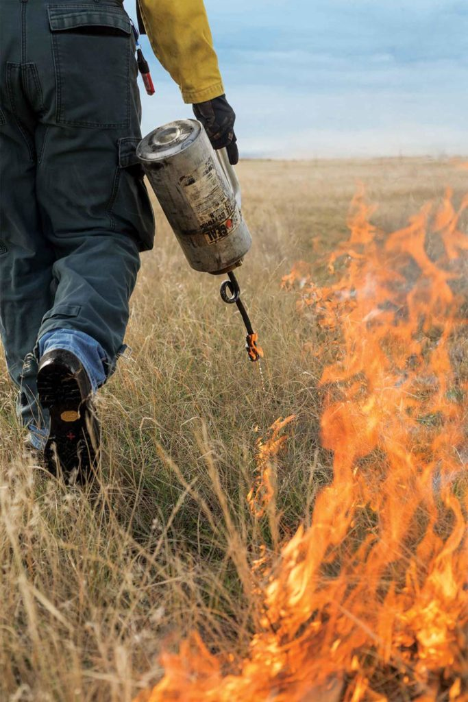 Lance Vermeire lights up a native prairie plot for research he hopes will spur more controlled burns in the Great Plains.