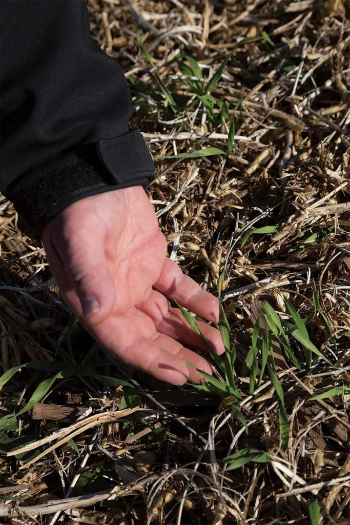Demonstrations track how cover crops following soybeans help boost soil health.