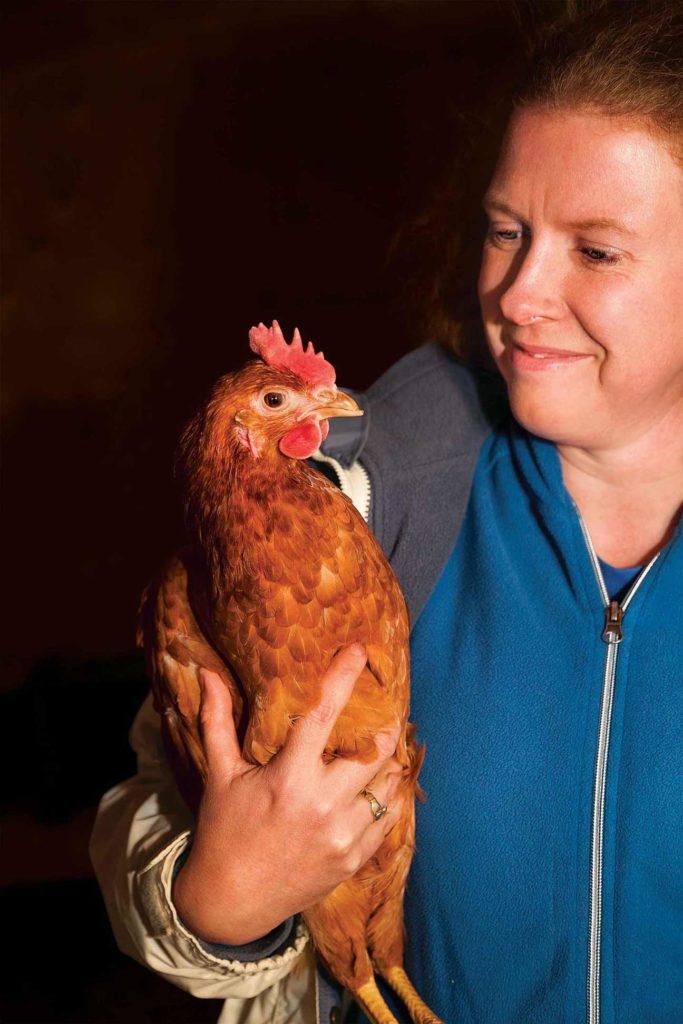 À l'approche de l'Halloween, Homestead Kate récupère les poules louées et les ramène à la ferme pour les mois d'hiver.