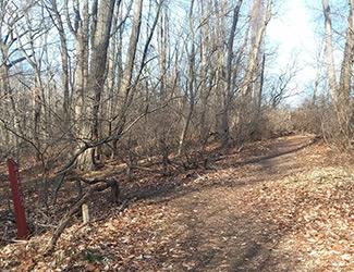 Adaptive Hiking