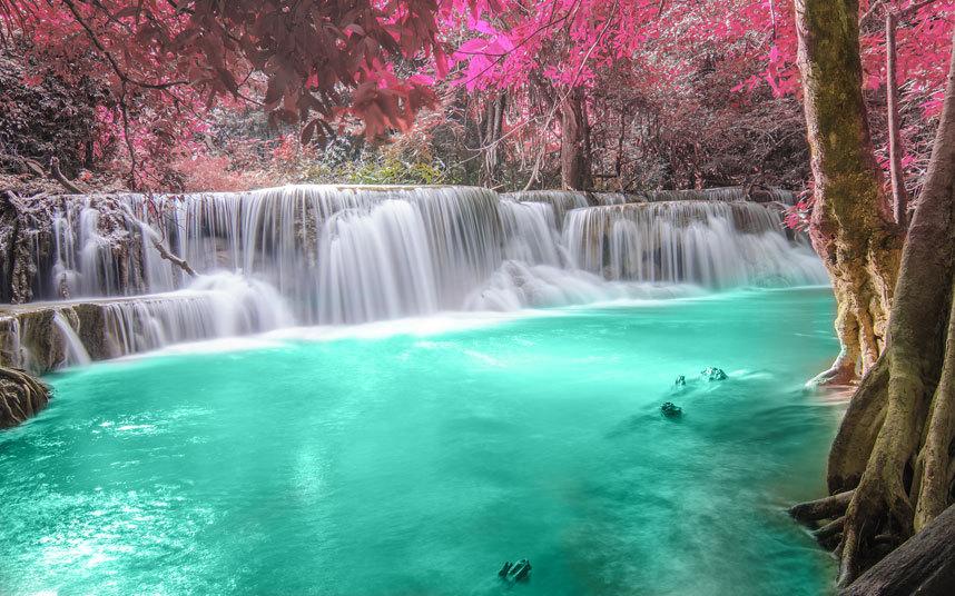 pink-tree-waterfall-image
