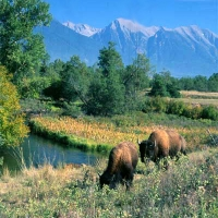 National Bison Range in Western Montana.