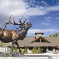 Rocky Mountain Elk Foundation in Western Montana.