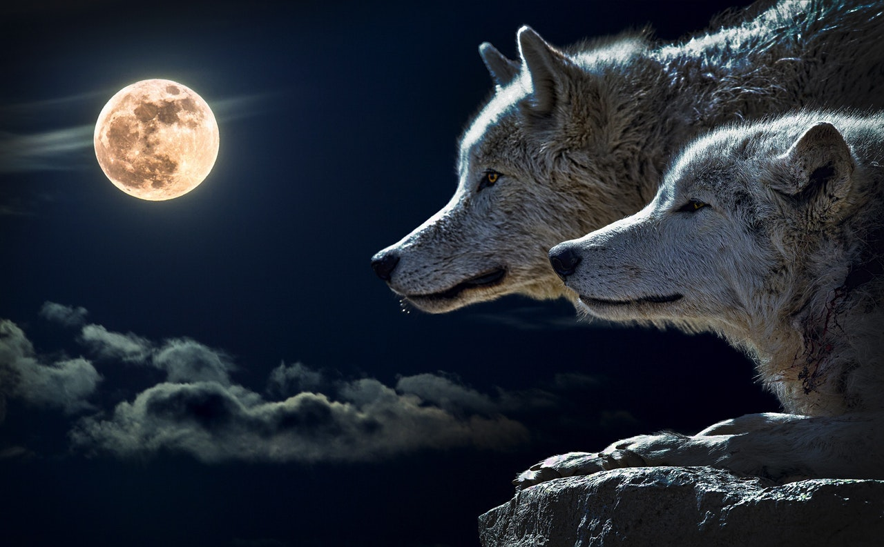 10 Effects From A Full Moon That You Didn't Know